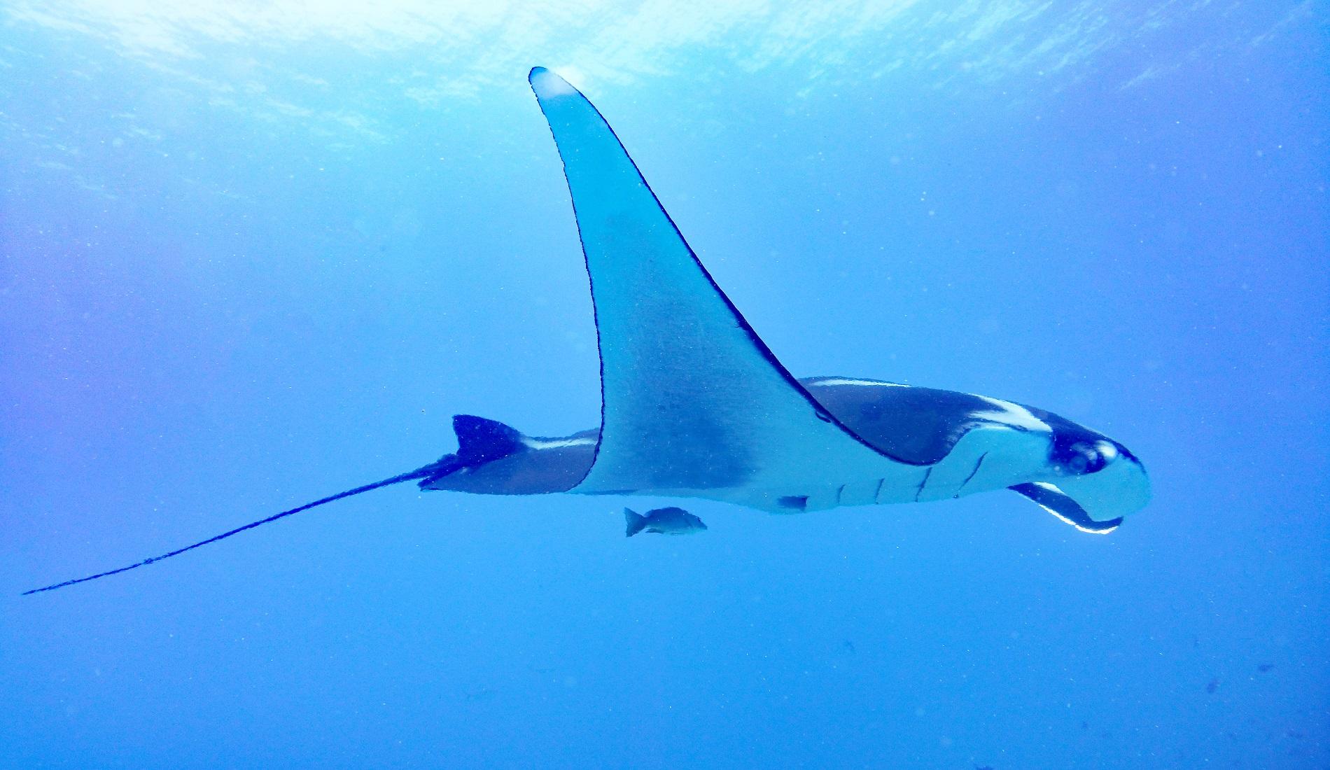 rog cano island duiken costa rica