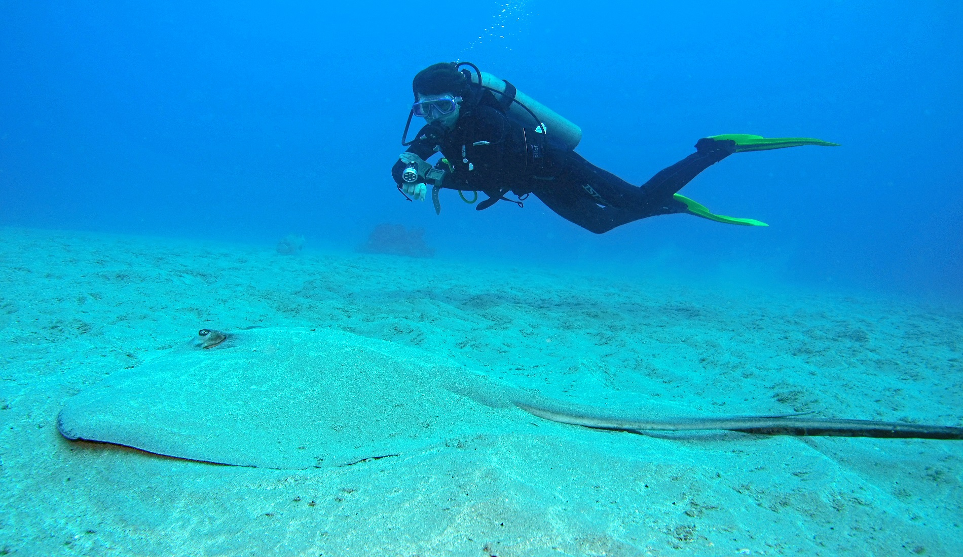 rog duiker cano island duiken costa rica