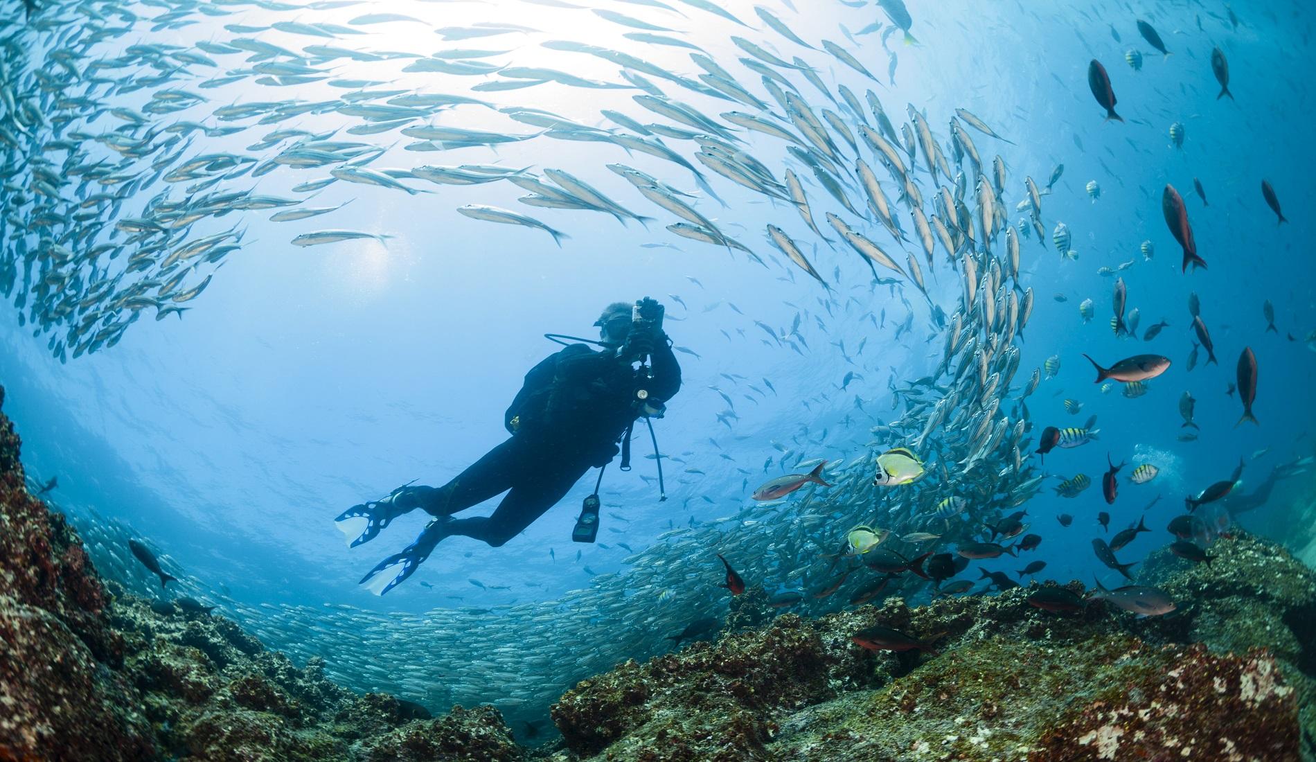 rondreis galapagos duiken