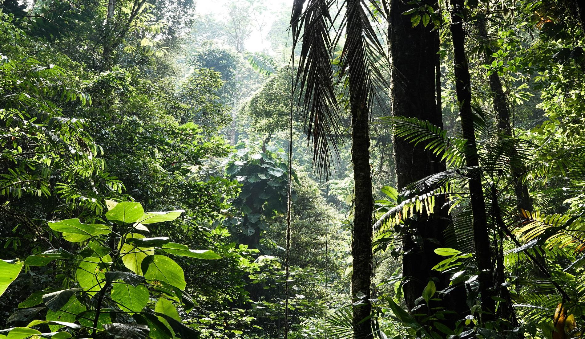 rondreis costa rica regenwoud