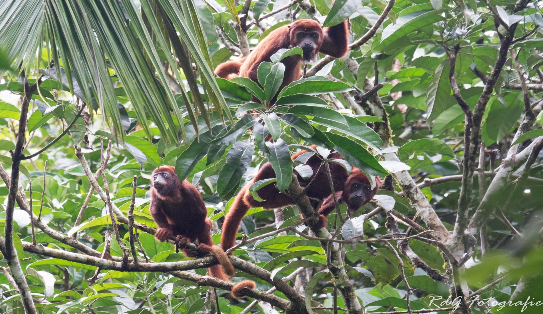 rondreis ecuador en galapagos brulapen amazone