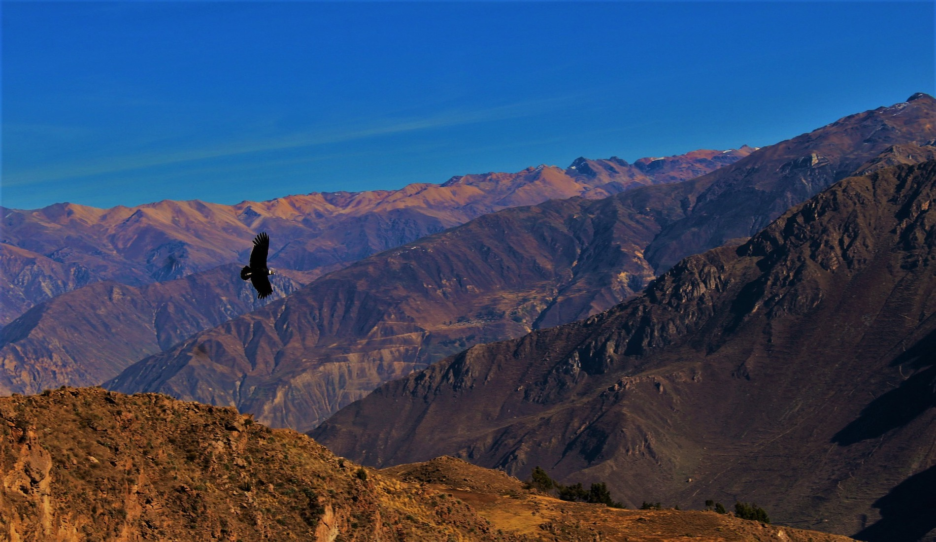 rondreis peru colca canyon