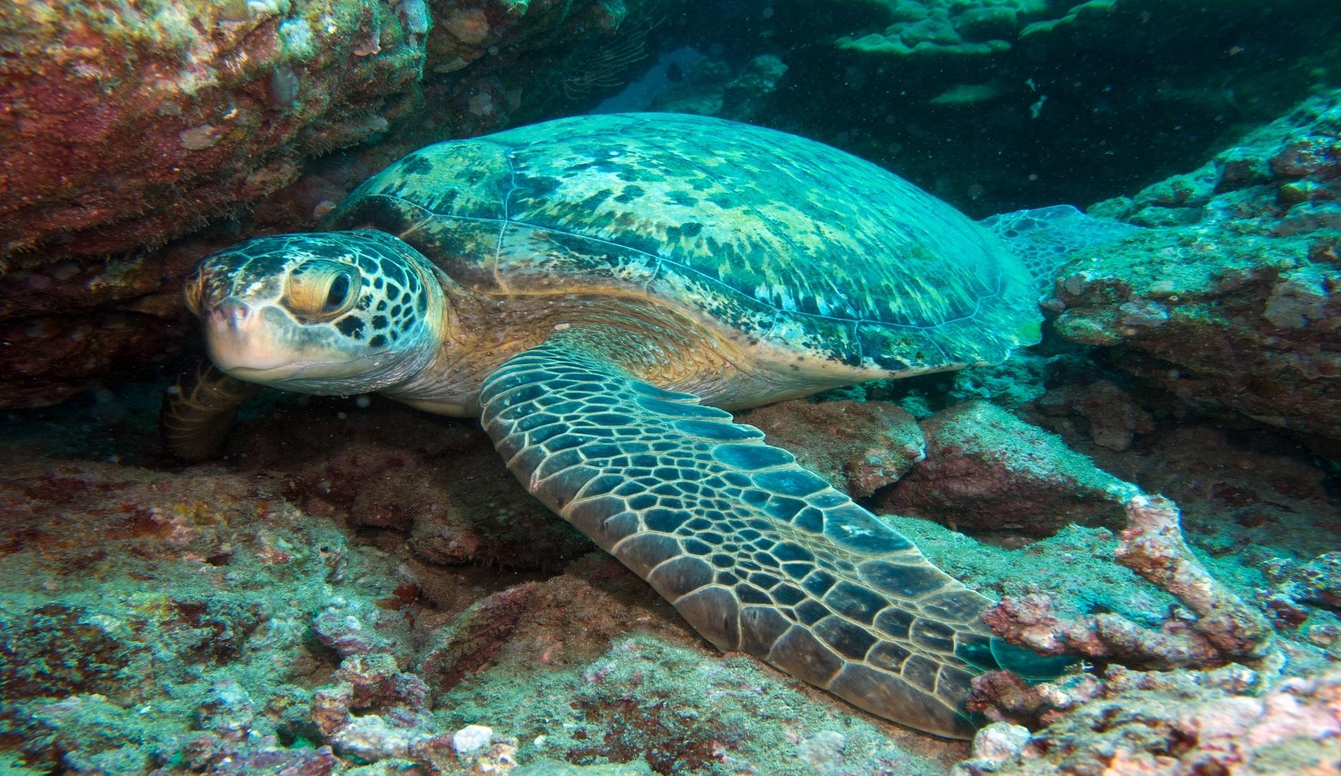 schildpad duiken costa rica