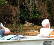 Jaguar safari tocht