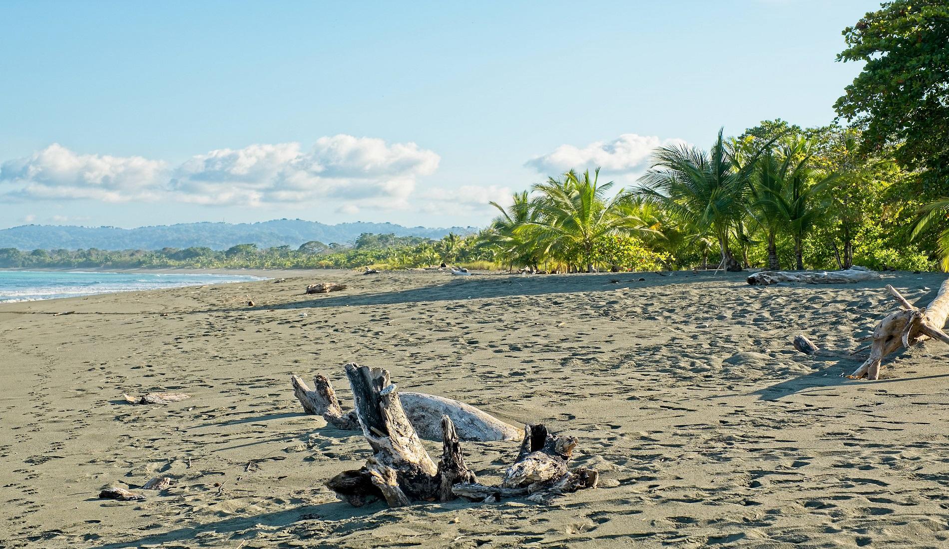 strand regenwoud puerto jimenez