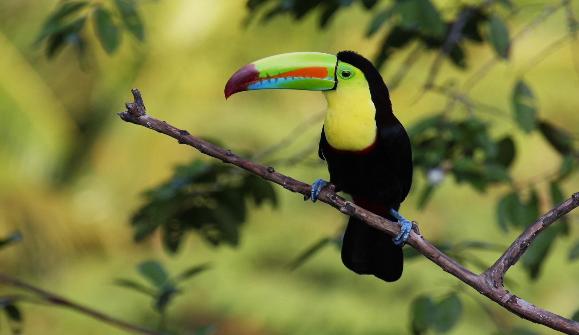 toekan regenwoud costa rica met kinderen