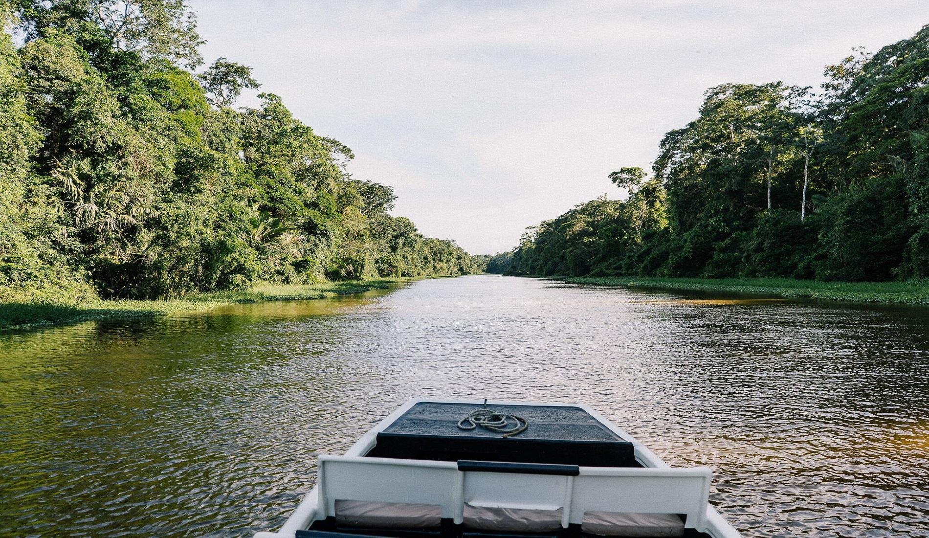 varen tortuguero regenwoud