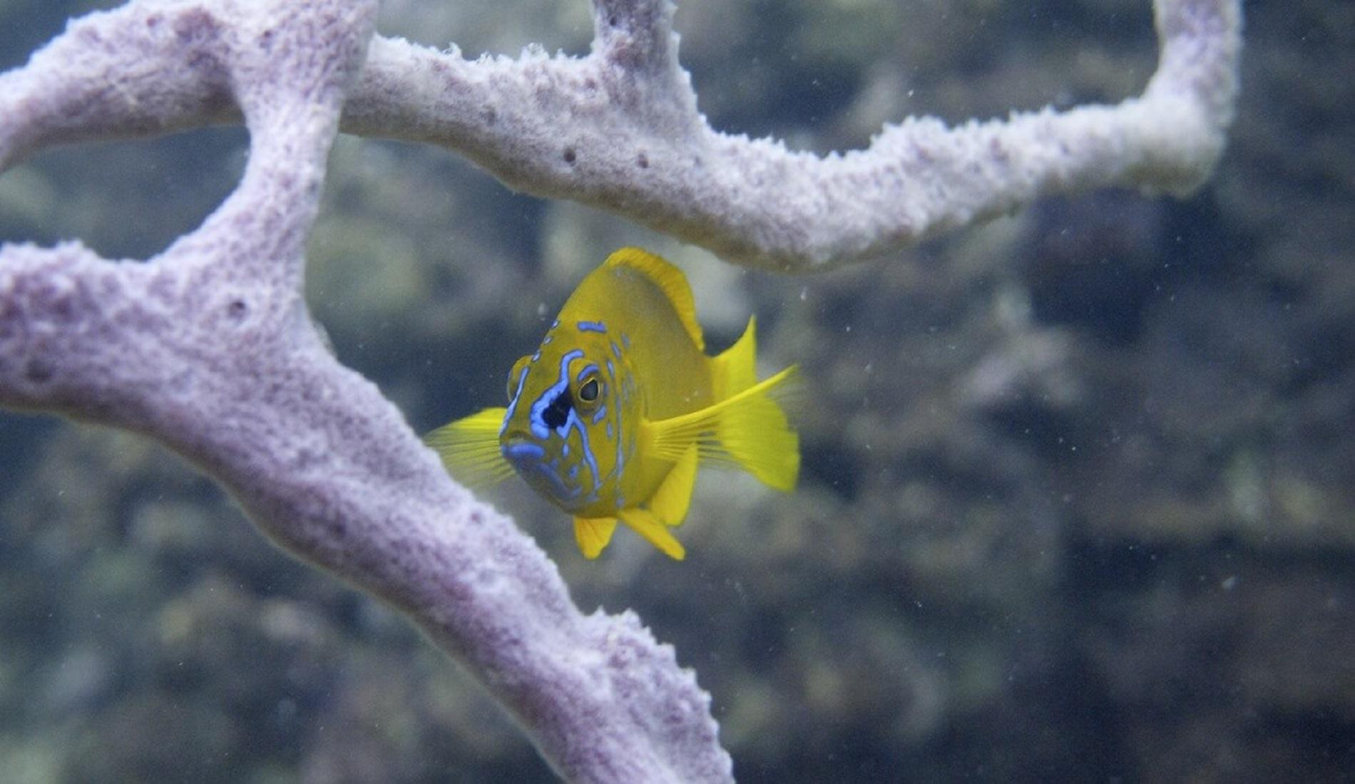vis duikreis panama