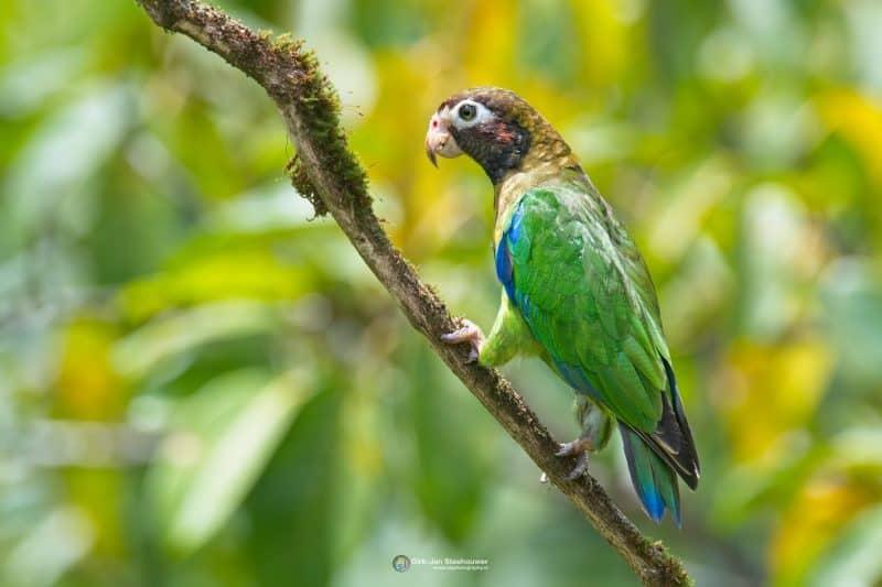 vogelreis costa rica papegaai