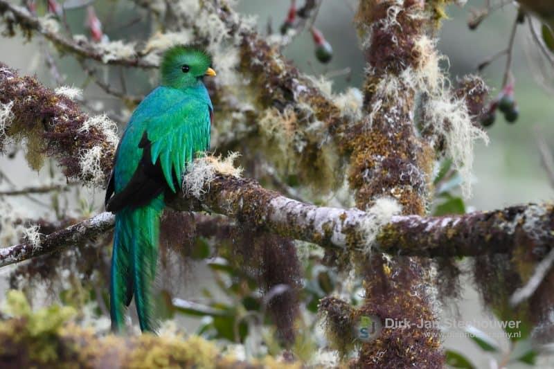 vogelreis costa rica quetzal