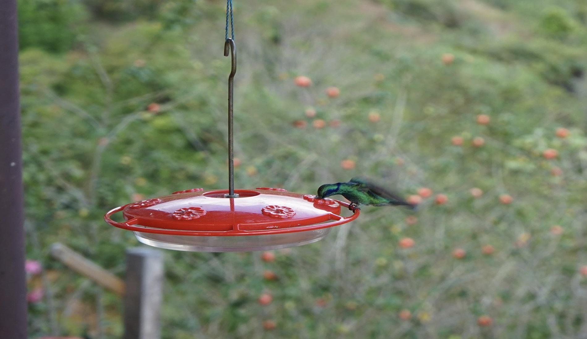 vogelreis panama kolibrie