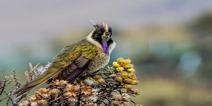 vogelreizen colombia