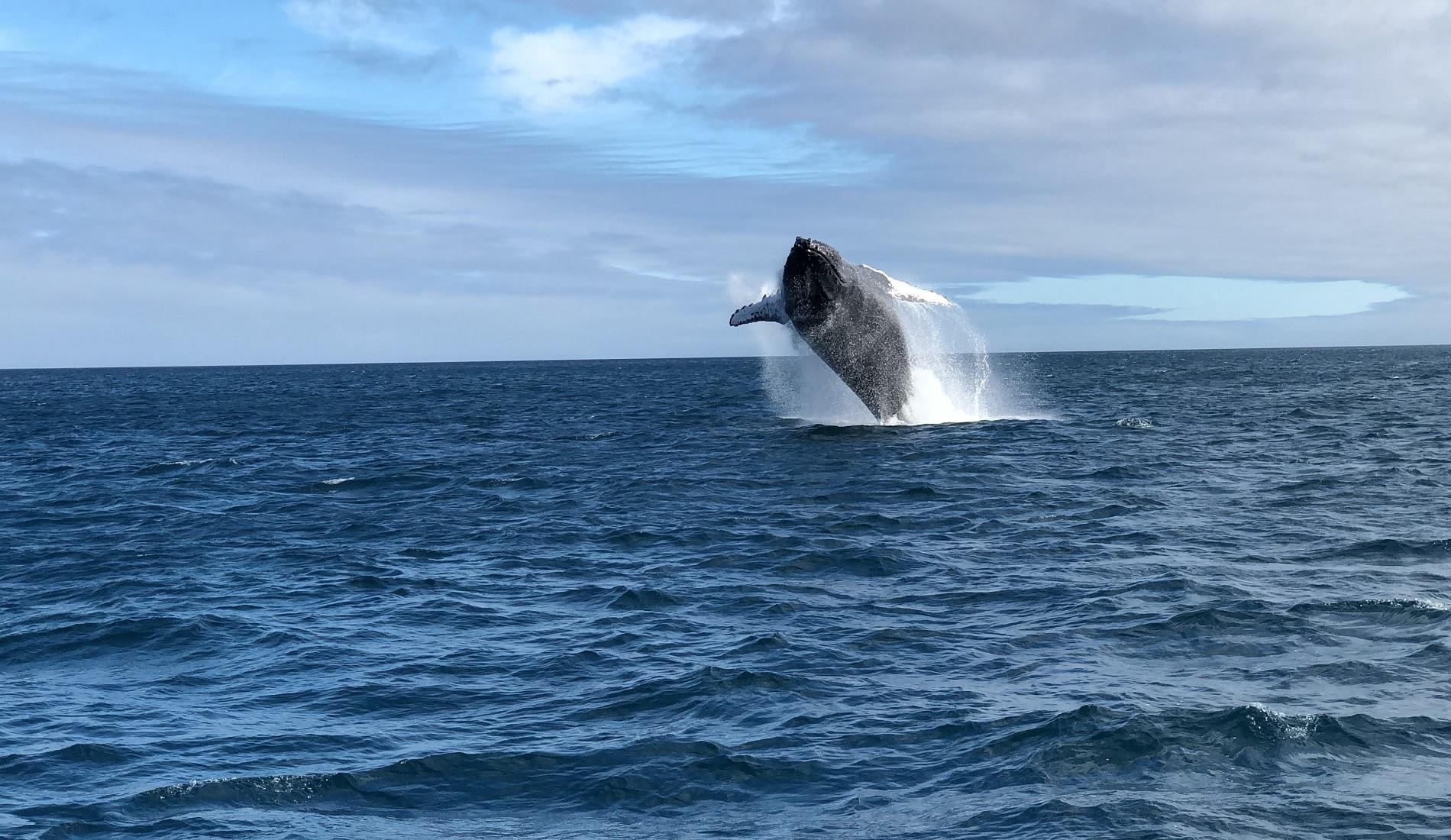 walvis galapagos eilanden