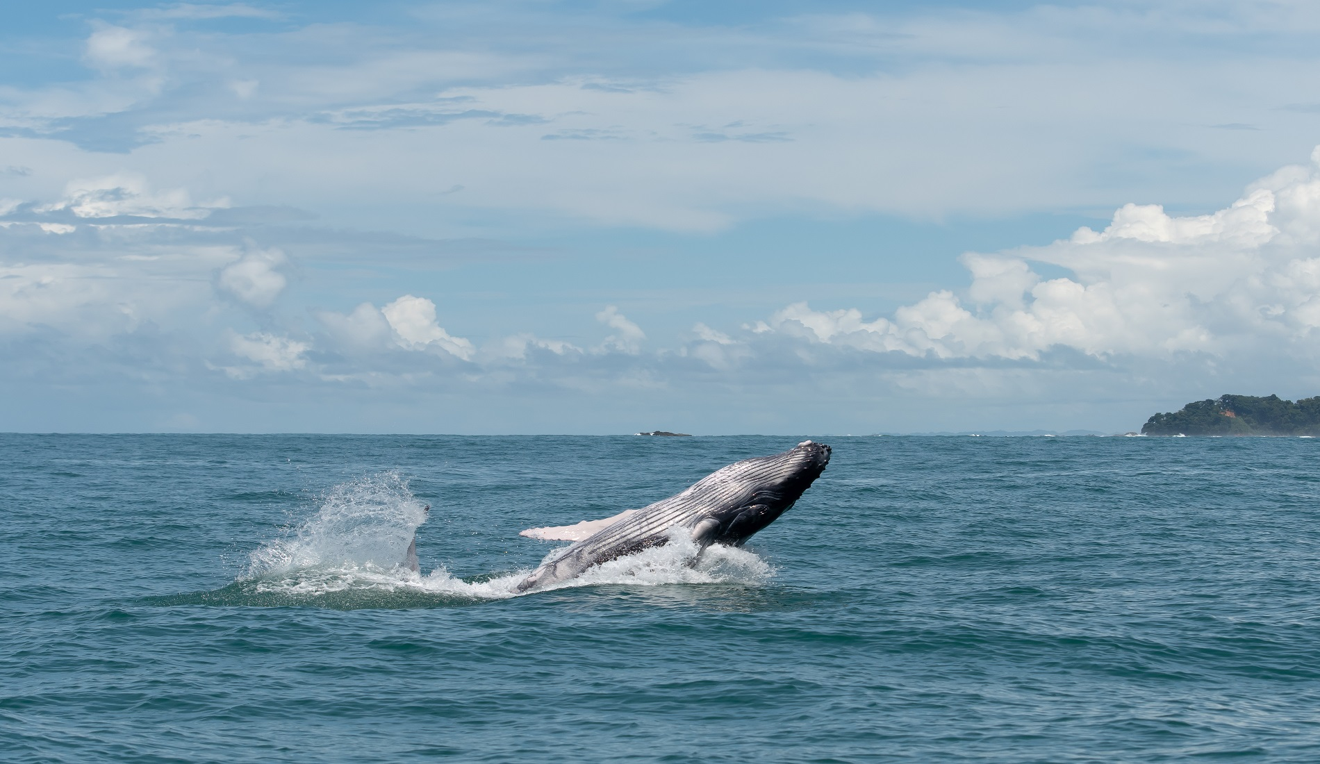 walvis in costa rica