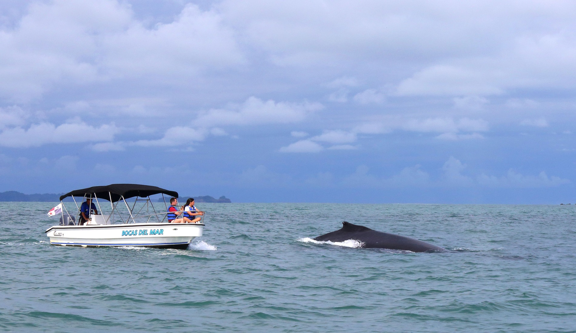 walvis panama