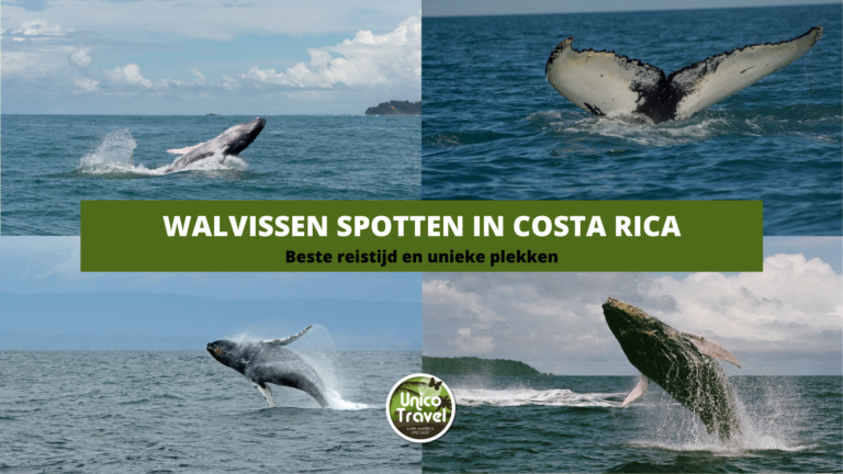 walvissen in costa rica