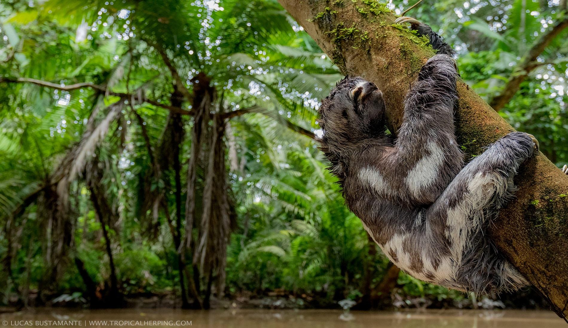 wildlife luiaard luxe reis ecuador