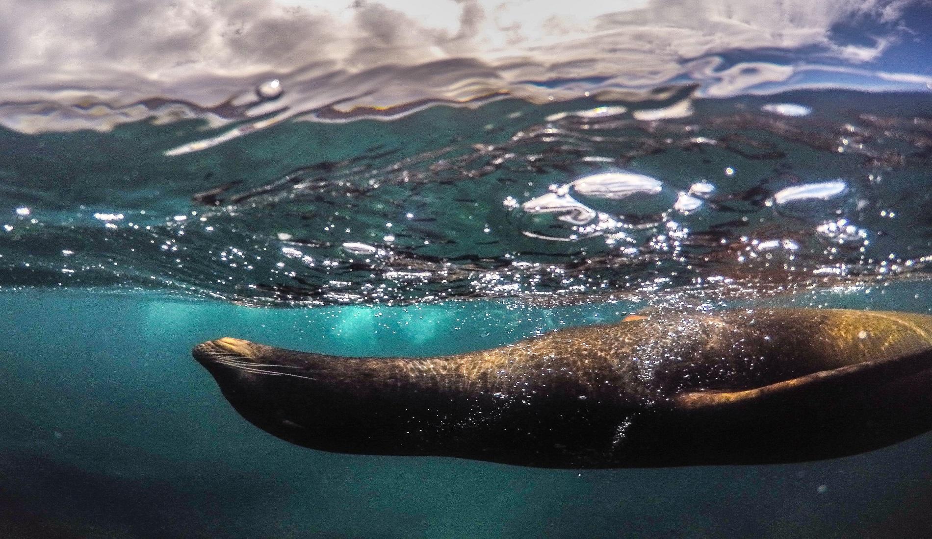 zeeleeuw duikreis galapagos eilanden