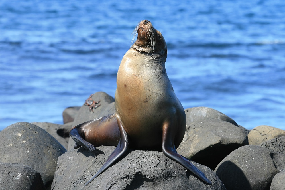 zeeleeuw eilandhoppen galapagos eilanden